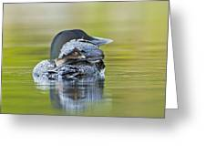 Loon Chick- Feather Hat Greeting Card