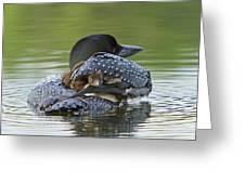 Loon Chick - Peek A Boo Greeting Card