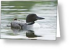 Loon Chick Rise And Shine Greeting Card