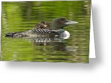 Loon Chicks - Best Buddies Greeting Card