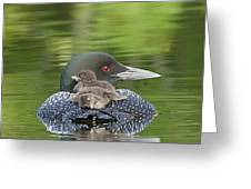 Loon Chicks -  Nap Time Greeting Card