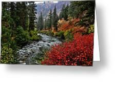 Loon Creek In Fall Colors Greeting Card