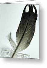 Loon Feather Greeting Card