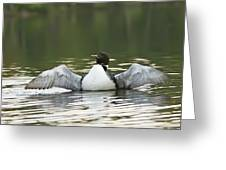 Loon Wing Spread - Drying Off Greeting Card
