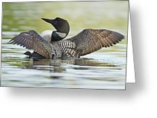 Loon Wing Spread With Chick Greeting Card
