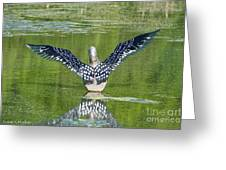 Loon Wings Greeting Card