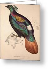 Lophophorus Impeyanus Male Himalayan Monal Pheasant Birds Drawing By Quint Lox