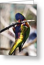Lorikeet Bird Greeting Card