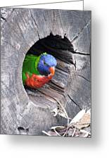 Lorikeet - Peek-a-boo Greeting Card