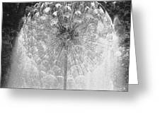 Loring Fountain Black-and-white Greeting Card