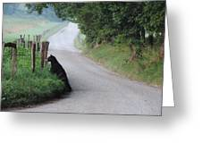 Lost Bear Cub In Cades Cove Greeting Card