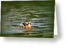 Lost Duck Greeting Card