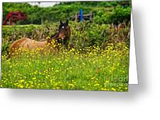 Lost In Buttercups Greeting Card