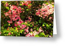 Lost In Pink Greeting Card