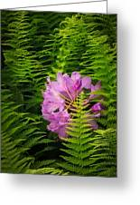Lost In The Fern Garden Greeting Card