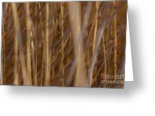 Lost In The Reed Greeting Card