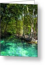 Lost Lagoon On The Yucatan Coast Greeting Card