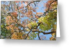 Lost Maples Greeting Card