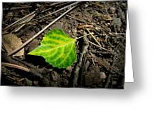 Lost On The Forest Floor Greeting Card