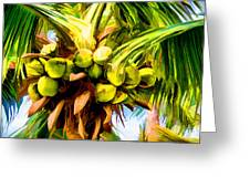Lots Of Coconuts Greeting Card