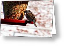 Lots Of Seeds Three Greeting Card