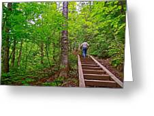 Lots Of Steps On La Chute Trail In Forillon Np-qc Greeting Card