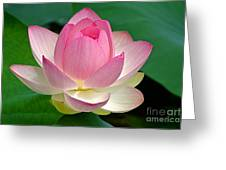 Lotus 7152010 Greeting Card