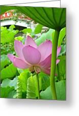 Lotus And Bridge Greeting Card