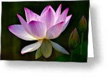 Lotus And Buds Greeting Card by Susan Candelario