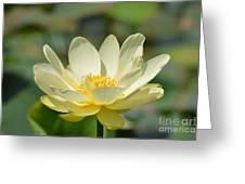 Lotus Blooming  Greeting Card