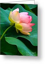 Lotus Blossom And Leaves Greeting Card by Byron Varvarigos