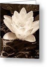 Lotus Blossom Greeting Card by John Pagliuca