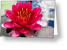 Lotus Cloud Greeting Card