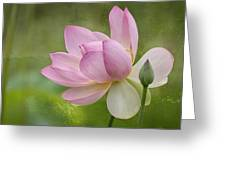 Lotus Dance Greeting Card