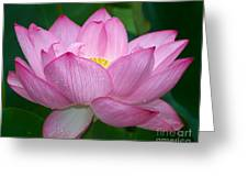 Lotus Drops Greeting Card