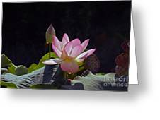 Lotus Enchantment Greeting Card