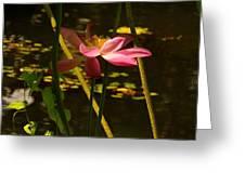 Lotus Flower At The West Lake Greeting Card