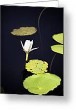 Lotus Flower- Gungarre Billabong V2 Greeting Card