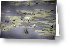 Lotus Flower- Gungarre Billabong V3 Greeting Card