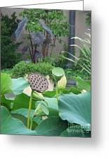 Lotus Flower In Lily Pond Greeting Card