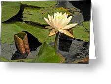 Lotus Flower In White Greeting Card