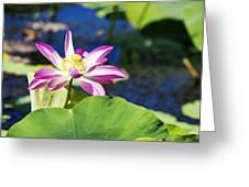 Lotus Flower V6 Greeting Card