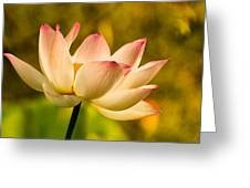 Lotus In Morning Light Greeting Card