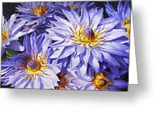 Lotus Light - Hawaiian Tropical Floral Greeting Card