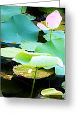 Lotus Lilly Pond Greeting Card