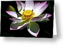 Lotus Of The Night Greeting Card
