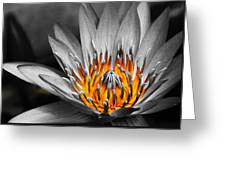 Lotus On Fire Greeting Card