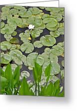 Lotus Pads Greeting Card