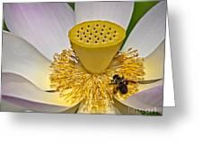 Lotus Pollinator Greeting Card