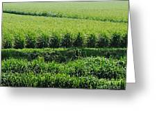 Louisiana Cane Field Greeting Card